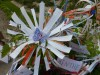 detail_pt_jardin.jpg